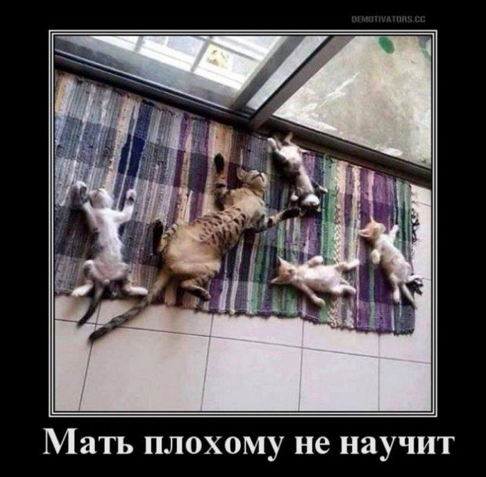 kak-obshchatsia-s-mamoi